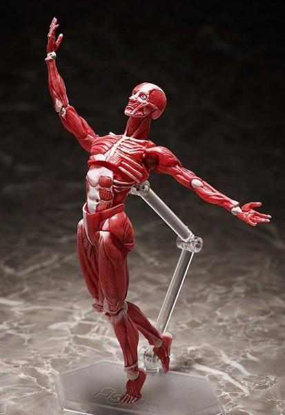 Original Character Figma Actionfigur Human Anatomical Model