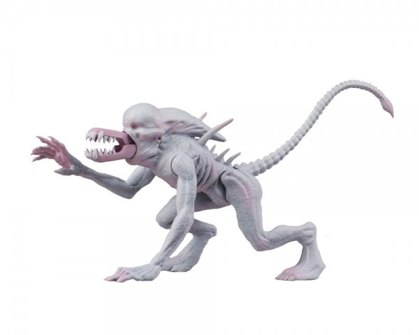 Alien & Predator Classics Actionfiguren-Set Serie 1 (2)